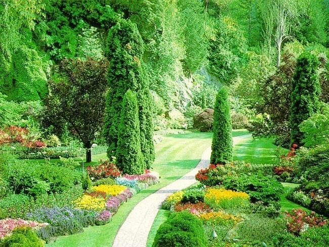 Старому саду поможет даже простое прореживание