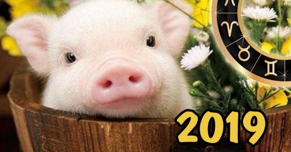god-svini-kak-vstretit-2019